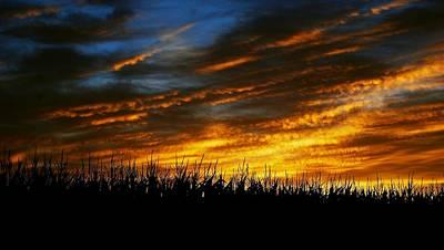 Photograph - High Corn Sunset by Eric Tressler
