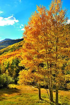 Photograph - High Country Aspens by Ray Mathis