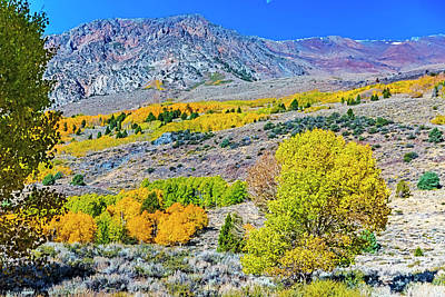 Photograph - High Country Color by Nancy Marie Ricketts