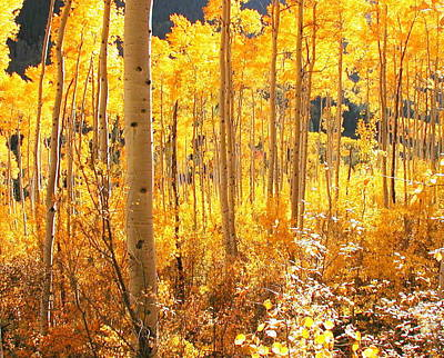 High Country Gold Art Print by The Forests Edge Photography - Diane Sandoval