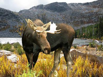 High Country Moose Art Print by Robert Bissett