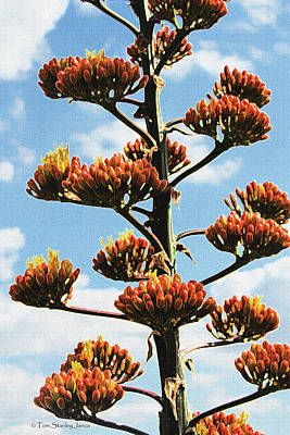 High Country Red Bud Agave Art Print