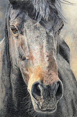 Horses Portrait Drawing - High Desert  by Joanne Stevens