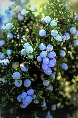 Digital Art - High Desert Juniper Berries by Aliceann Carlton
