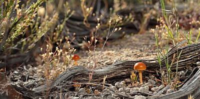 Photograph - High Desert Shroom by SB Sullivan
