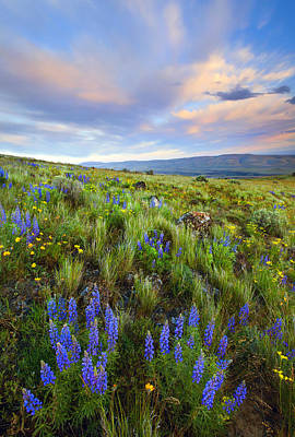 High Desert Spring Art Print by Mike  Dawson