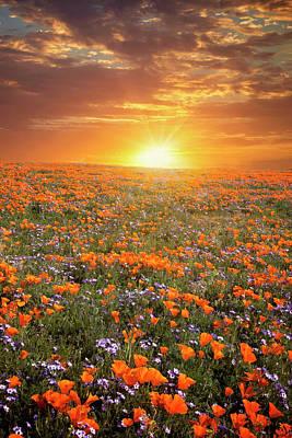 Photograph - High Desert Wildflower Sunset by Lynn Bauer