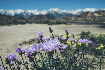 Photograph - High Desert Wildflowers by Margaret Pitcher
