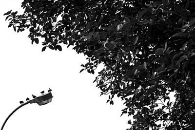 Nature Shot Photograph - High Five by Prakash Ghai