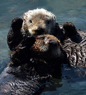 Photograph - High Five Sea Otter Morro Bay California 2 by Barbara Snyder