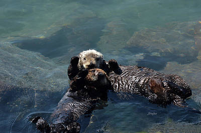 Photograph - High Five Sea Otter Morro Bay California by Barbara Snyder