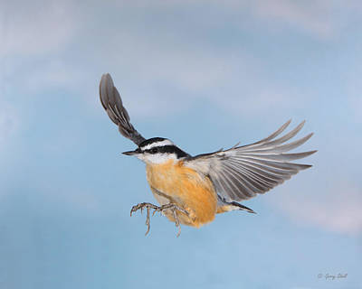 Photograph - High Flyer by Gerry Sibell