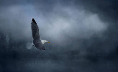 Photograph - High Flying Gull by Marilyn Wilson