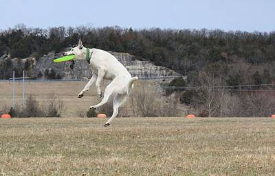 Photograph - High Flying Max by Patricia Olson