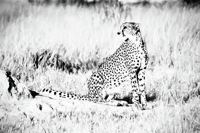 Photograph - High Key Cheetah by Kay Brewer