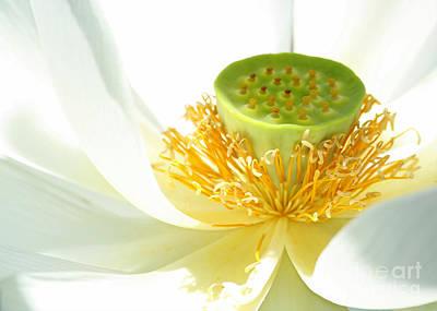High Key Lotus Print by Sabrina L Ryan