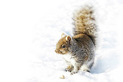Photograph - High Key Squirrel by Tatiana Travelways