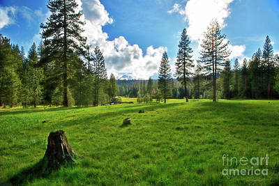 Photograph - High Meadow by David Arment