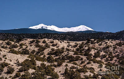 Pinion Photograph - High Mountain Desert by Roselynne Broussard
