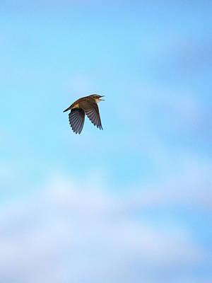Photograph - High Notes. Sedge Warbler by Jouko Lehto