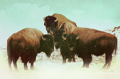 High Plains Bison Art Print