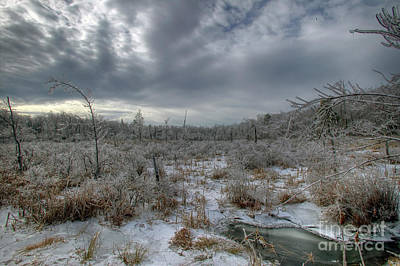 Photograph - High Point Marsh by Nicki McManus