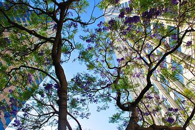Photograph - High Rises Through Purple Blossoms by Matt Harang