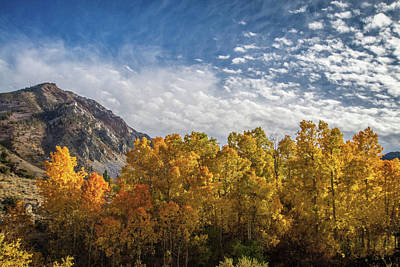 Photograph - High Sierra Gold by Lynn Bauer