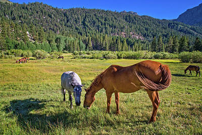 Photograph - High Sierra Horses by Lynn Bauer