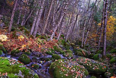 Photograph - High Sierra Stream by Skyler Russell