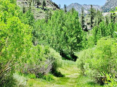 Photograph - High Sierra Summer by Marilyn Diaz