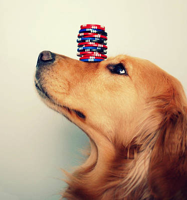 Golden Retrievers Photograph - High Stakes by Elizabeth Aldridge