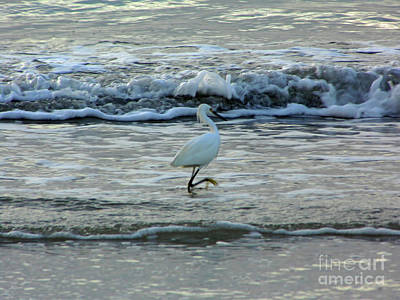 Photograph - High Stepping In The Surf by D Hackett