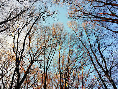 Photograph - High To The Sky by Jasna Dragun