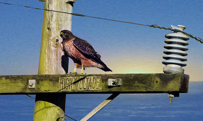 Marin County Digital Art - High Voltage by Stan Angel