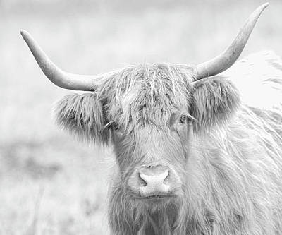Photograph - Highland Breed by Steve McKinzie