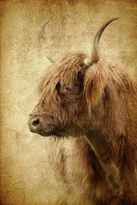 Photograph - Highland Bull Paint by Athena Mckinzie