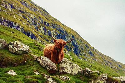 Painting - Highland Cow 2 by Celestial Images