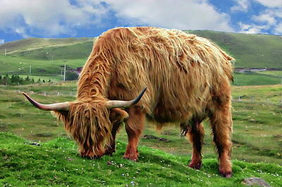 Photograph - Highland Cow by Anthony Dezenzio