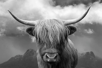 Photograph - Highland Cow - Ben Loyal by Grant Glendinning