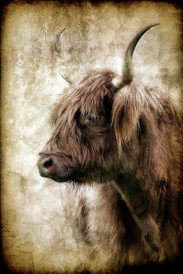 Photograph - Highland Cow Black by Athena Mckinzie