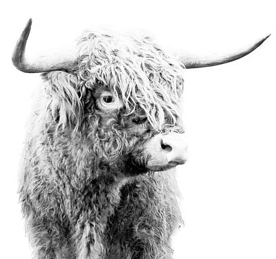 Photograph - Highland Cow Bw by Athena Mckinzie
