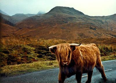 Photograph - Highland Cow by Douglas Barnett
