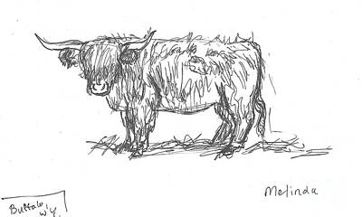 Drawing - Highland Cow Field Sketch by Dawn Senior-Trask