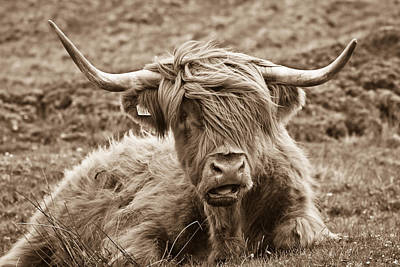 Skye Photograph - Highland Cow  by Justin Albrecht