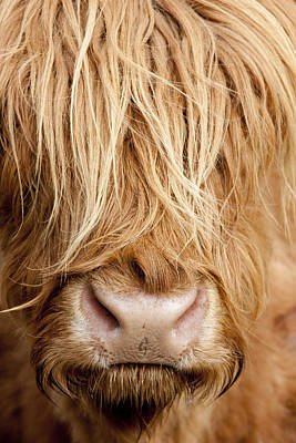 Photograph - Highland Cow by Karen Van Der Zijden