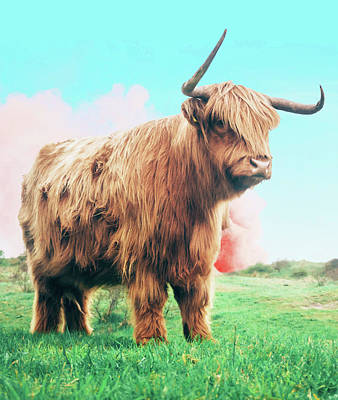Photograph - Highland Cow by Uma Gokhale