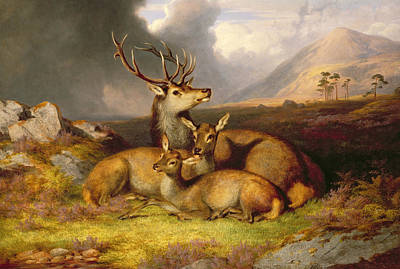 Highland Felicity Print by James Gills