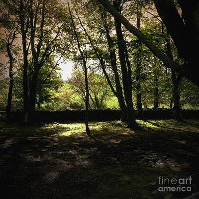 Photograph - Highland Forest by Mary-Lee Sanders