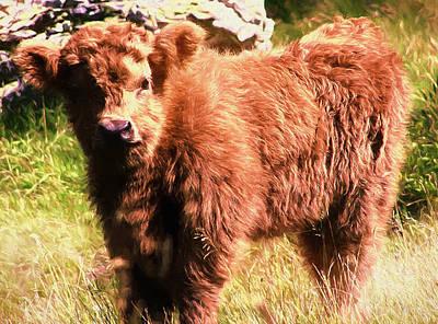 Photograph - Highland Fur Baby by Ericamaxine Price